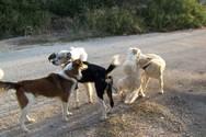 Οι δράσεις του Δήμου Πατρέων για τα αδέσποτα ζώα συντροφιάς