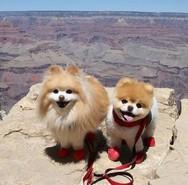 Πέθανε το «πιο χαριτωμένο» σκυλάκι του κόσμου (φωτο)