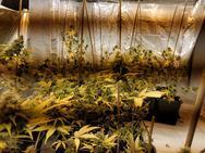 Πάτρα: 42χρονος καλλιεργούσε στο υπόγειο διαμέρισμά του υδροπονική κάνναβη (φωτο)