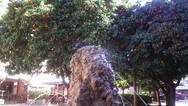 Πάτρα: Το συντριβάνι της Τριών Ναυάρχων είναι παρατημένο και εγκαταλελειμμένο