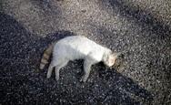 Νεκρές γάτες στο κέντρο της Πάτρας - Καταγγελίες από φιλόζωους, τι συμβαίνει;