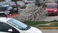 Πάτρα: Έπεσε μεγάλο δέντρο στο πάρκινγκ του νοσοκομείου του Ρίου