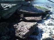 Αχαΐα: Τα μπάζα στην παραλία Καμινίων 'έστησαν' φράγμα και έγιναν επικίνδυνα (pics)