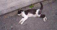 Βόνιτσα: Έδωσαν δηλητηριασμένη τροφή σε γάτα