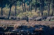 ΟΙΚΙΠΑ: 'Όργιο λαθροθηρίας στην καρδιά του Εθνικού Πάρκου Κοτυχίου - Στροφυλιάς'