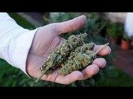 Δυτική Ελλάδα: Βρέθηκαν στην... τσιμπίδα του νόμου για ναρκωτικά