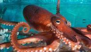 Μερικές περίεργες αλήθειες για τα θαλάσσια ζώα