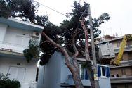 Μαρούσι - Δέντρο έπεσε πάνω σε σπίτι (φωτο)