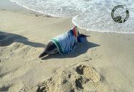 Νάξος: Διασώθηκε νεαρό δελφίνι που βγήκε σε παραλία (φωτο)