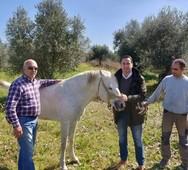 Κ. Μητρόπουλος: 'Οφείλουμε να προστατεύουμε τα άλογα της φυλής της Πηνείας'