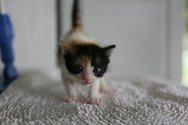 Πάτρα: Χαμός στα Ζαρουχλέικα για μια γάτα στο μπαλκόνι!