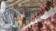 Βουλγαρία: Συναγερμός για κρούσματα γρίπης των πτηνών