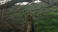 Κρέμασαν σκύλο σε δέντρο στη Λήμνο
