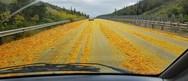 Δρόμος στην Κύπρο, 'πλημμύρισε' από... πορτοκάλια (φωτο)