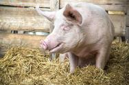 Στη φυλακή κτηνοτρόφος βιομηχανικής εκτροφής στη Γερμανία