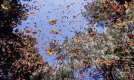 Εκατομμύρια πεταλούδες 'σκέπασαν' την Κύπρο