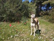 Πάτρα - Άκαρπες οι προσπάθειες για τον εντοπισμό της σκυλίτσας Δάφνα