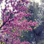 Το Instagram της Πάτρας πήρε το χρώμα της άνοιξης και την αύρα του καλοκαιριού (pics)