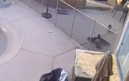 Γεράκι επιτίθεται σε σκύλο (video)