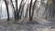 Δυτική Ελλάδα: Οι πρώτες φωτογραφίες από τα όσα έκαψε η φωτιά στη Στροφυλιά