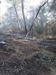 Φορέας Διαχείρισης Υγροτόπων Κοτυχίου - Στροφυλιάς: 'Κάηκαν πάνω από 1.500 στρέμματα δάσους'