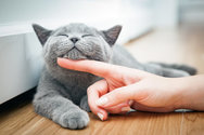Όλα όσα δεν ξέρατε για τις γάτες