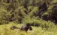 Η 'Μητέρα Φύση' στα καλύτερά της (video)