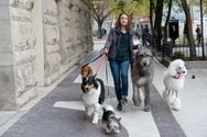 A Dog's Journey - Μια γλυκιά και τρυφερή ιστορία για την πιο δυνατή φιλία που μπορεί να υπάρξει!