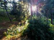 Όταν ο ήλιος 'κρύβεται' στις φυλλωσιές των δέντρων