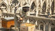 Παναγία των Παρισίων: Οι 200.000 μέλισσες επιβίωσαν από τη φωτιά