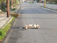 Άγνωστος θανάτωσε έξι αδέσποτους σκύλους στο Μεσολόγγι