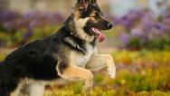 Μασαχουσέτη: Σκυλιά κατασπάραξαν 14χρονο που πήγε να τα ταΐσει!
