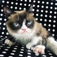 Πέθανε η πιο διάσημη γάτα του διαδικτύου (φωτο+video)