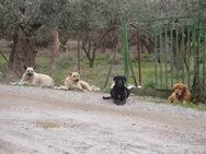 Αγρίνιο: Δώδεκα αδέσποτοι σκύλοι τραυμάτισαν 56χρονο