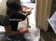 Θεσσαλονίκη: Φίδι προκάλεσε αναστάτωση σε εστιατόριο