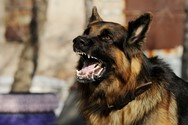 Μεσολόγγι - Σκύλος δάγκωσε στο πόδι 17χρονη