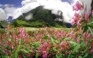 Η πανέμορφη κοιλάδα των λουλουδιών στην Ινδία