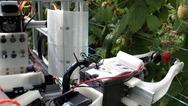 Το πρώτο ρομπότ που μαζεύει σμέουρα ταχύτερα από ανθρώπους είναι γεγονός (video)