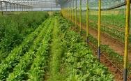 Επιπλέον κονδύλια για βιολογικές καλλιέργειες