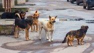 Πάτρα: Κοριτσάκι δέχτηκε επίθεση από σκυλιά στον χώρο του ΠΓΝΠ