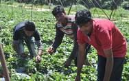 Σύγχρονοι δούλοι παραμένουν οι εργάτες της Μανωλάδας στην Ηλεία