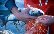 Οι ψαράδες στην Ιταλία ανακυκλώνουν τα πλαστικά της θάλασσας