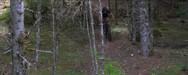 Ένα όμορφο βίντεο για το MtB μέσα από τα δάση της ορεινής Ναυπακτίας