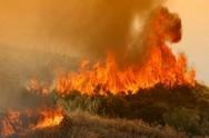 Κάτω Αχαΐα - Φωτιά σε δασική έκταση, στα Τσαμέικα