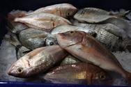 Κατάσχεσαν 10 κιβώτια ακατάλληλα ψάρια
