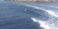 Δελφίνια κάνουν... παιχνίδια σε ταξιδιώτες στον Κορινθιακό Κόλπο (video)