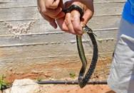 Ναύπλιο: Νερόφιδα απεγκλωβίστηκαν από δεξαμενή νερού (pics+video)