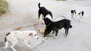 Πάτρα: Ξεκίνησαν οι διαδικασίες για το Δημοτικό Κτηνιατρείο
