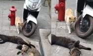 Γάτα πιάνει το... σύντροφό της στα πράσα με άλλη (video)