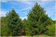 Επιστήμονες: 'Φυτέψτε ένα τρισεκατομμύριο νέα δένδρα σε όλο τον κόσμο'